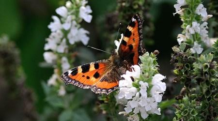 Tiddesley Wood Nature Reserve