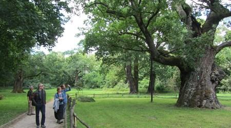 Oak Trees of Rogalin