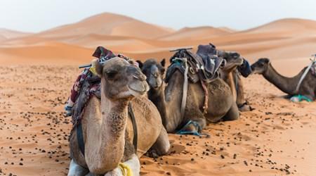 Red Sand Dunes Adventures