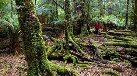 The Tarkine Rainforest Walk