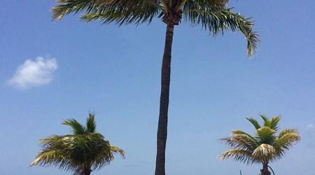 Las Olas Beach and Boulevard