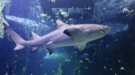 SEA LIFE Sydney Aquarium