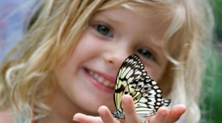 """The Museum of Live Butterflies """"Tropical Paradise"""""""