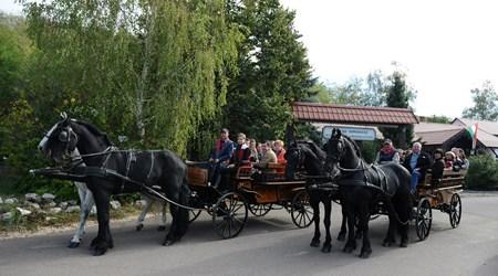 Egedhegyi Lipizaner Horse Ranch