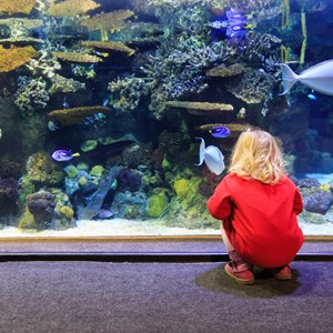 little girl watching fishes in a large aquarium / NadyaEugene/Shutterstock.com
