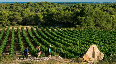 The vineyard of Hérault Méditerranée