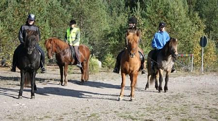 Grim Island Horses, Hållsta