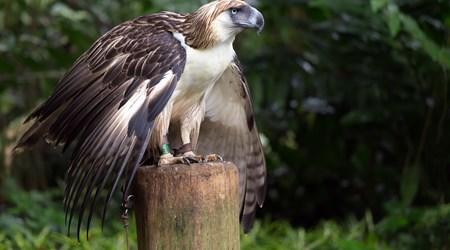 Philippine Eagle Conservation Centre