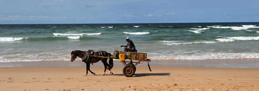 horse on the beach of Senegal