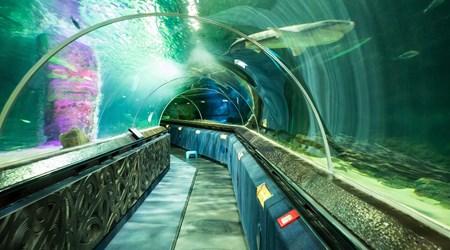 Kelly Tarlton's SEA LIFE Aquarium