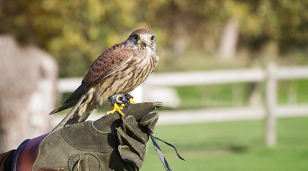 Falconcrest Roofvogel Park
