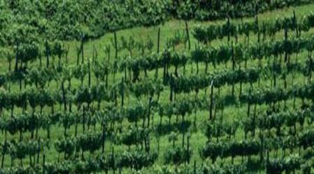 Viticulture Bodren