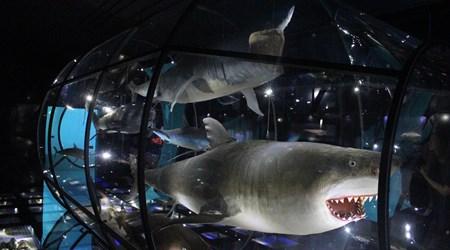 Natural History Museum Rijeka