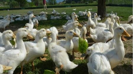 Family farm Mario Krog