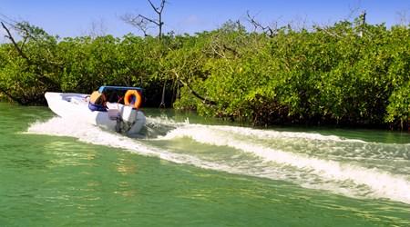Speedboat Mangrove Tours