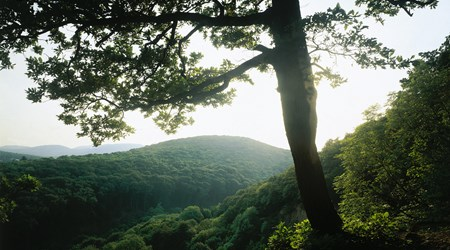 The Vienna Woods
