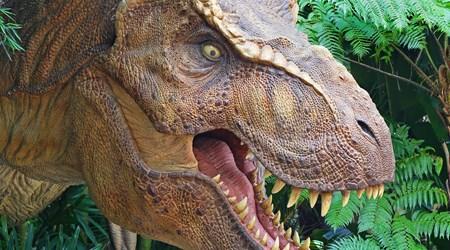 Musée - Parc des Dinosaures