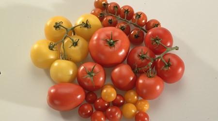 Tåstarps tomatoes