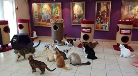 Cat Republic Museum