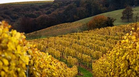 Wine Tasting in Jurançon