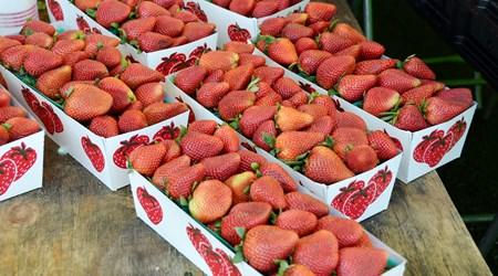 Tanaka Farms Strawberry Tours