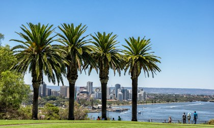 Looking through the palm trees in Kings Park to Perth