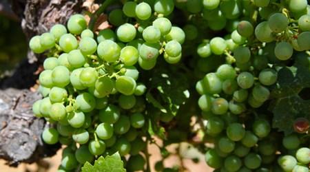 Pamo Valley Winery