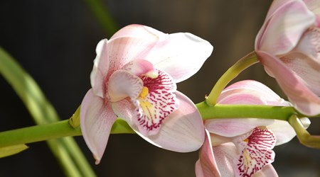 Orchid Display House