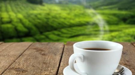 Janson Coffee Farm,