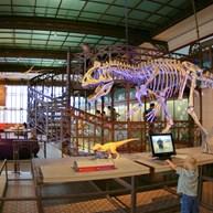 Royal Belgian Institute of Natural Sciences in Brussels