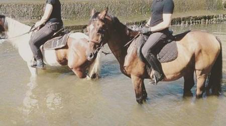 """Center """"Rhythm with the horse"""""""