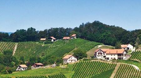 Winery Petrač