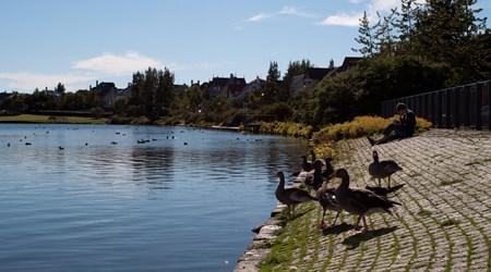 1. Tjörnin Lake