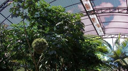 L'Umbracle Greenhouse