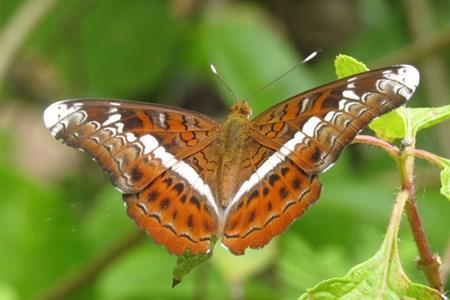 Banteay-Srey-Butterfly-Centre