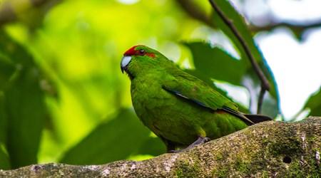 Zealandia - Karori Wildlife Sanctuary