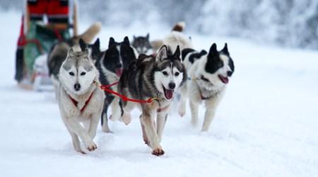 Jackson Hole's Continental Divide Dog Sled Adventures