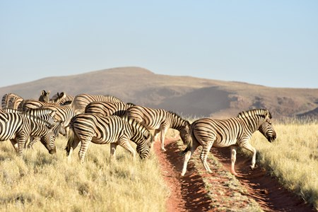 NamibRand-Nature-Reserve