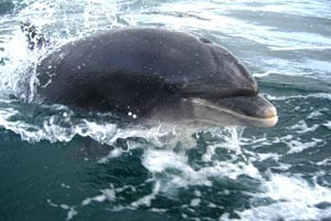 Boat Trips to Fungi The Dingle Dolphin