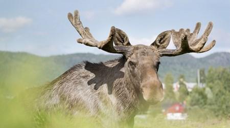 Älgens Hus (Elk Farm)