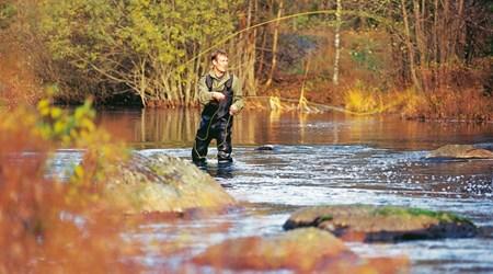 Stream Fishing Alsterån